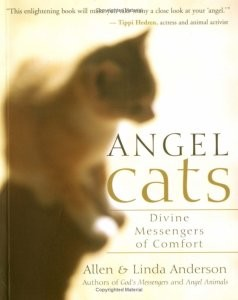 Angel Cats: Divine Messengers Of Comfort